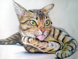 portrait Kitties -2 by evlena
