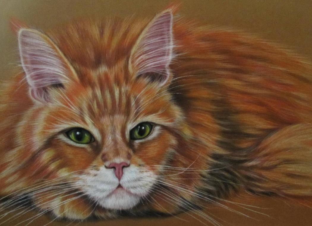 Cat by evlena