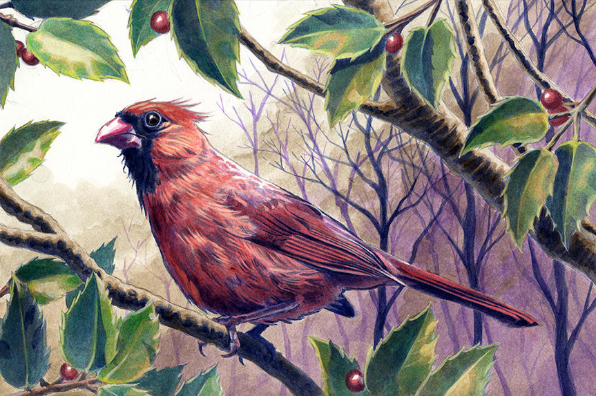 Cardinal Acrylics by Alanpaints