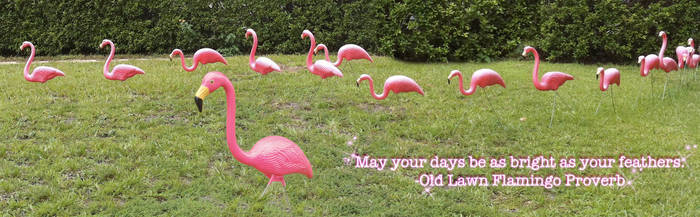 Flamingo Proverb by Jessica-in-Iowa