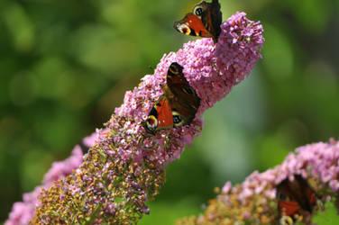 Butterfly Day 21. by xXseadragonXx