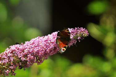 Butterfly Day 22. by xXseadragonXx