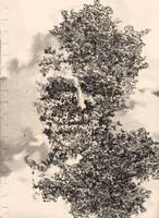 Dust by flycatcher263