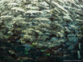 Fish by dSoto-Studio