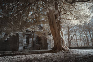 Churchyard Tree by richsabre