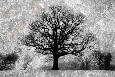 IR Tree Texture Edit by richsabre