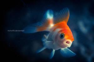 Goldfish by Nicho90