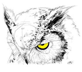 Owl by m2mazzara