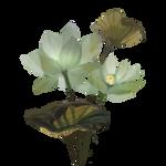Lotus by Ulfrheim