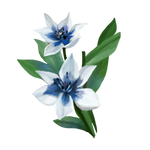 Lily by Ulfrheim