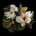Magnolia by Ulfrheim