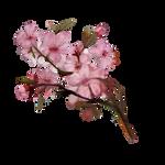 Sakura by Ulfrheim