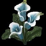 Calla Lily by Ulfrheim