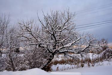 tree in winter by Aura-Dawn