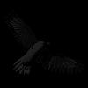blackbird, singing at the dead of night Db3he8d-453d2e76-70ba-41dc-81e4-2e94bc371a45