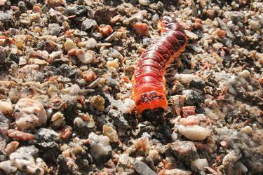 Caterpillar by LittleAngy