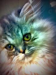lindo gatito by DonWho