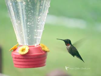 Ruby-Throated Hummingbird by debzdezigns-lamb68