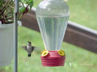 Happy Hummingbird by debzdezigns-lamb68