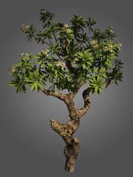 pohon kamboja by dwiirawan