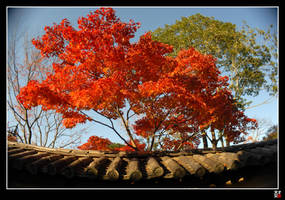 colors of fall 08 by tensai-riot
