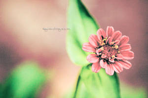 ...CreamY FantasY... by Elegance85