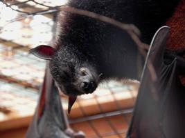 Happy Bat by illmatar