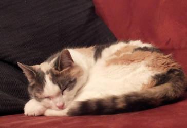Cinnamonroll by KittyCatHat