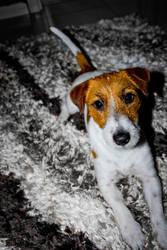 My Dog Romeo by aytugcakir