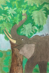 Elephant Feasting on Leaves by ntaylor24