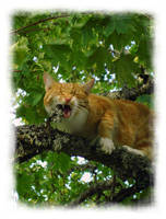 'Findus on a branch' by akinna