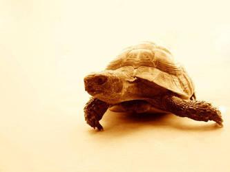 Turtle by FunkEx