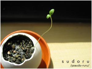 sudoru's Profile Picture