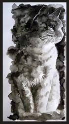 Cat by NayutaU