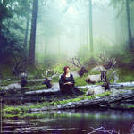 Seven deer by ForestGirl