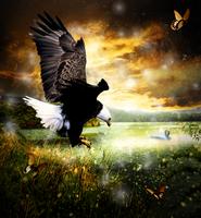 Eagles Paradise by butterscotchbob