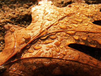 brown leaf and drops of water by rockmylife