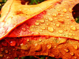 colorful leaf and drops by rockmylife