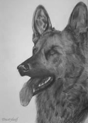 German Shepherd by Dustyleef
