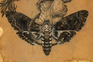 Tree of Death ... moth detail by urielstempest