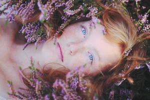 Heather Fields by sunsation