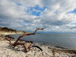 Swans at the coast by Acrylicdreams