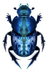 Bug Fff by ReSampled