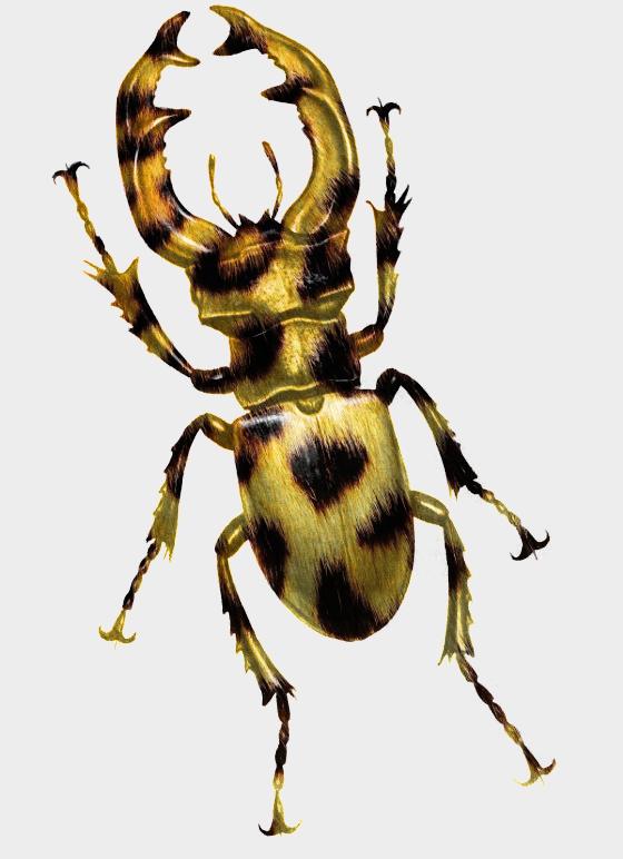 Bug Untitled by ReSampled
