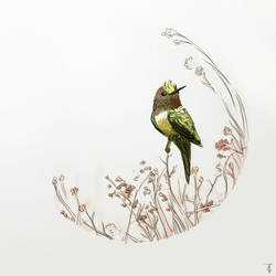 Hummingbird by TLCook