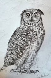 Owl#2 by IsabelleAuditore