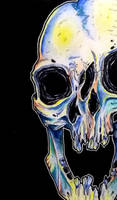 Colorful skull by forestrattus