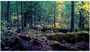 Forest by Angelov-net