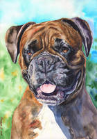 Boxer by GeorgeArt23