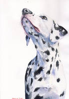 Dalmatian by GeorgeArt23